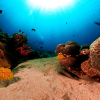 Go underwater diving with TOTAL PEACE of MIND